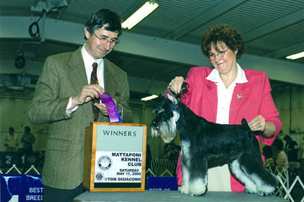 "Carron's let freed Ring- ""Ringer"" (by Shazzam Of Oz Custome Made X Camron I'm A Lulu), bred by Tanya myers and Carol ann Meitzler, own and shown by Carol Ann Meitzler"